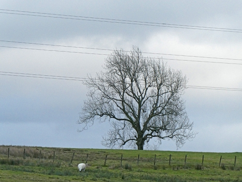 tree and power lines