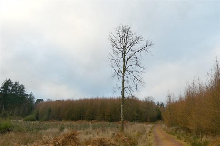 tree on track to kernigal