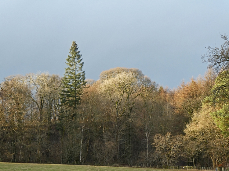 trees at end of murtholm