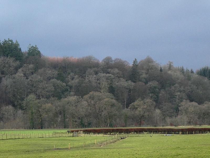 trees on Esk escarpment Canonbie