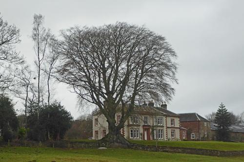 Woodhouselees trees