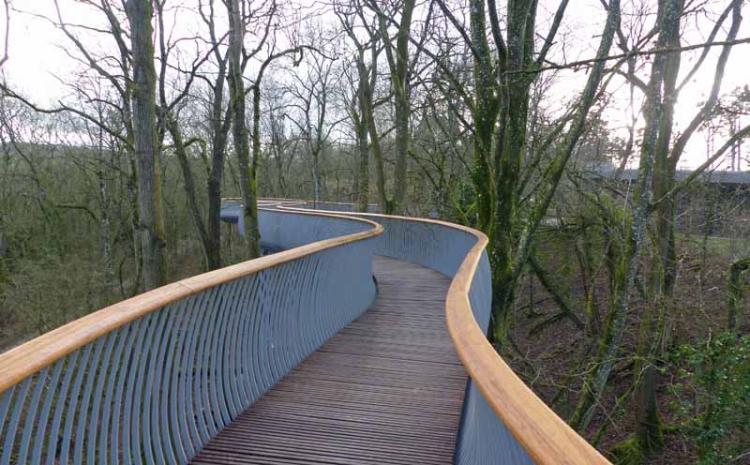 bridge the newt