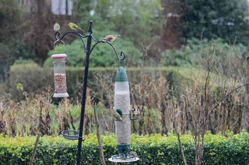 busy feeder and pole