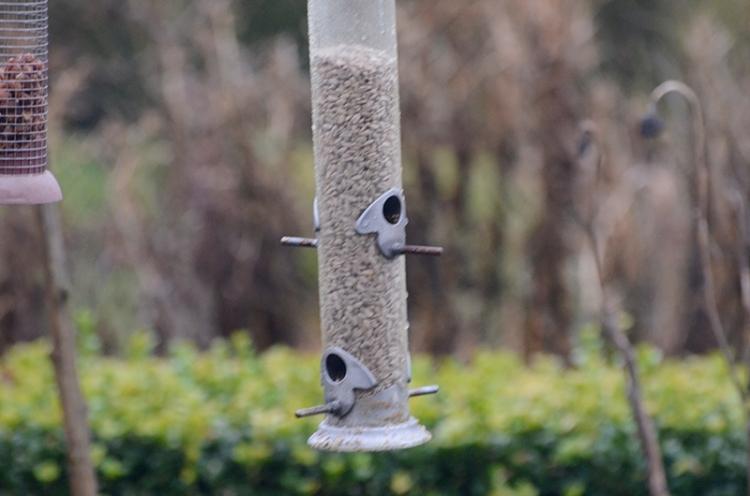 deserted feeder