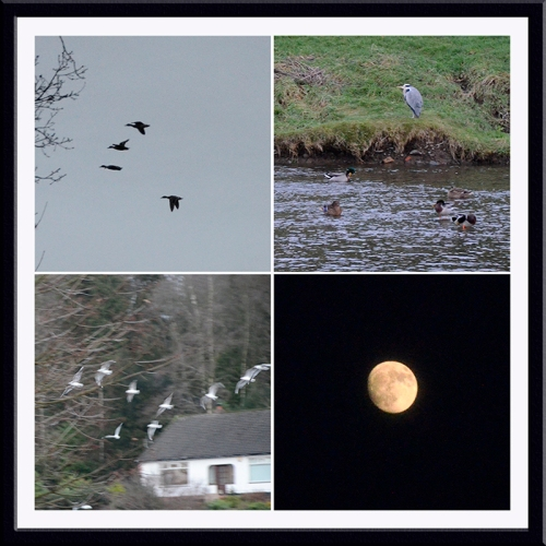 duck, gull, heron and moon