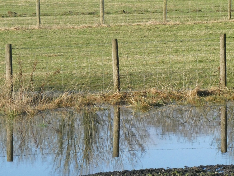fence post relections