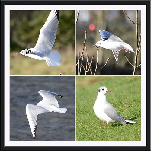 four gull panel