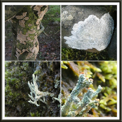 four lichens park wall