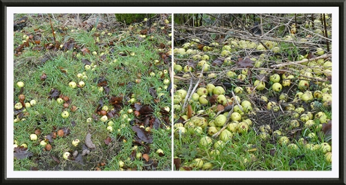 fruit on ground january