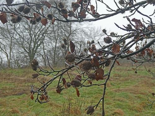 fruit on tree january
