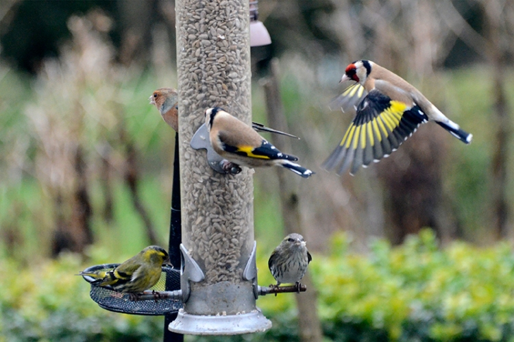 full feeder with visitor