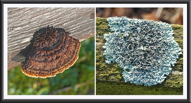 fungus and lichen waterside