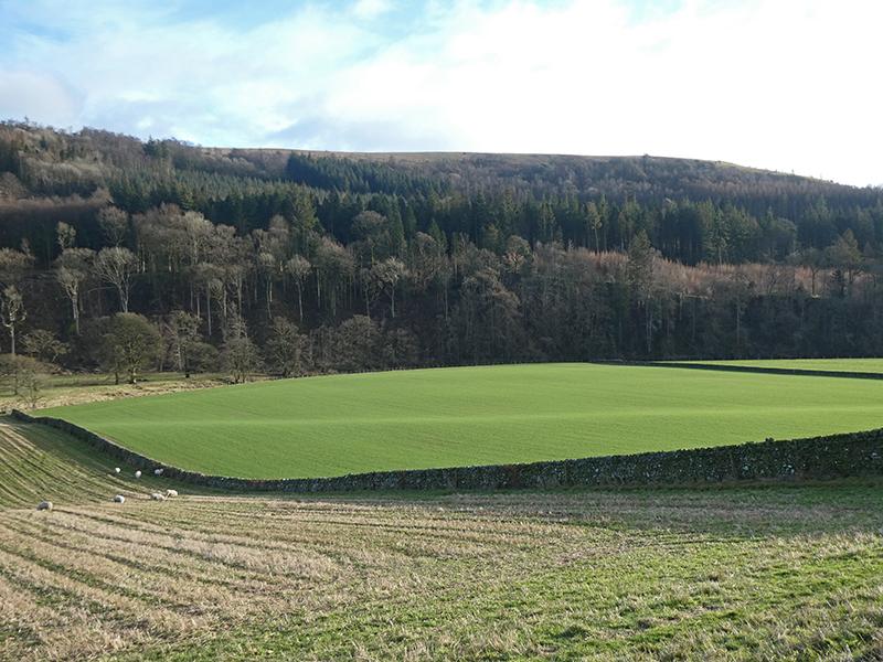 green fields milnholm