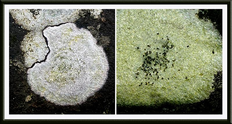 lichen on sawmill bridge
