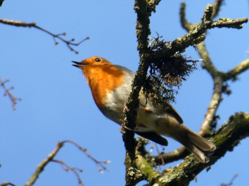robin at Potholm