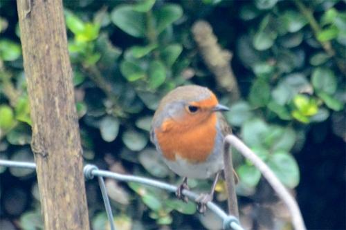 robin peering