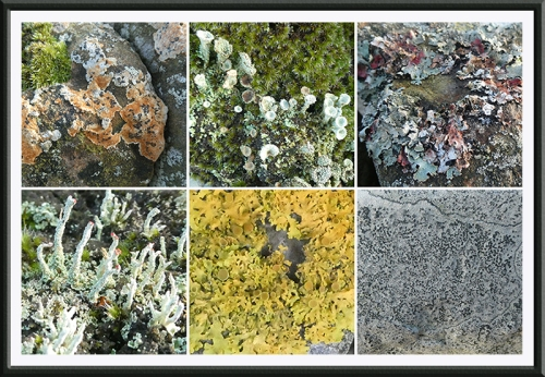 six lichen on potholm road wall