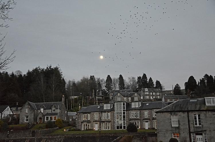 starlings landing