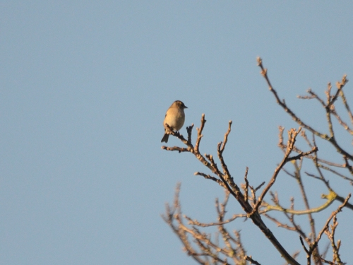 sunny bird on walnut