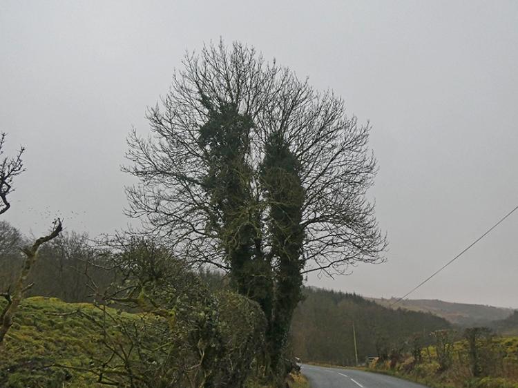 tree at churchyard