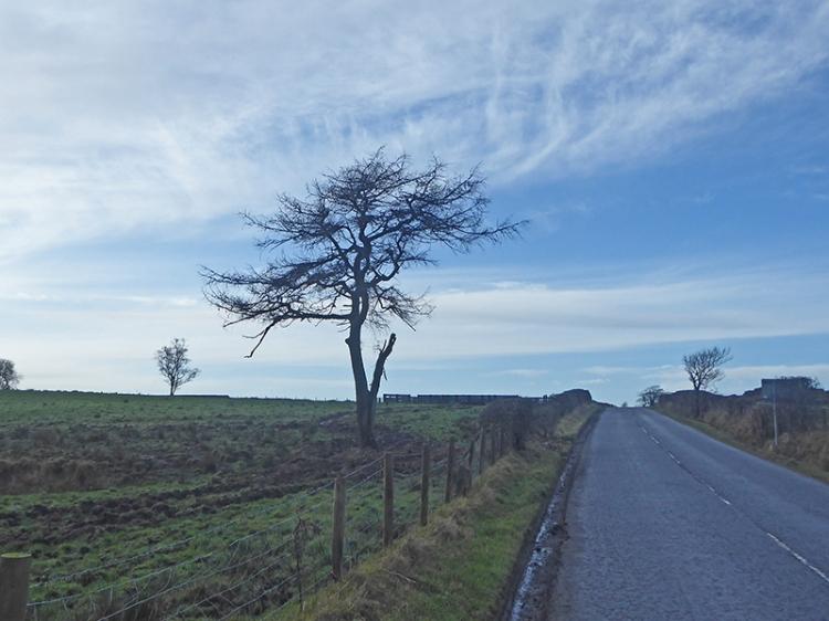 tree at Falford