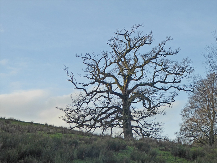 tree at irvine house