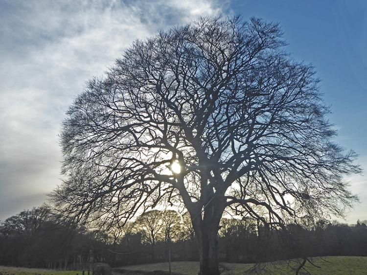 tree near old A74