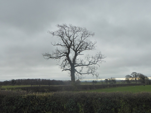 tree near scaleby 1