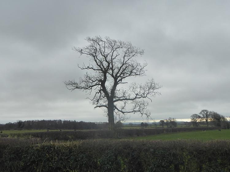 tree near scaleby 1