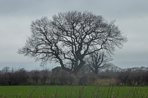 tree near scaleby 2