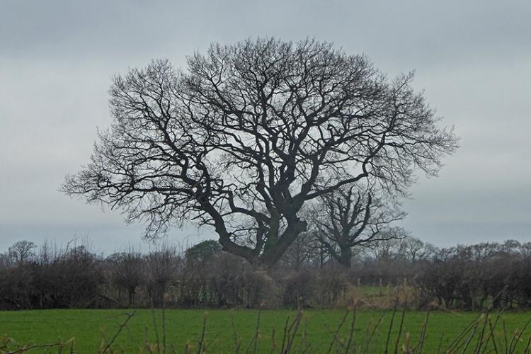 tree near scaleby 2