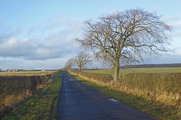 tree on Milltown road