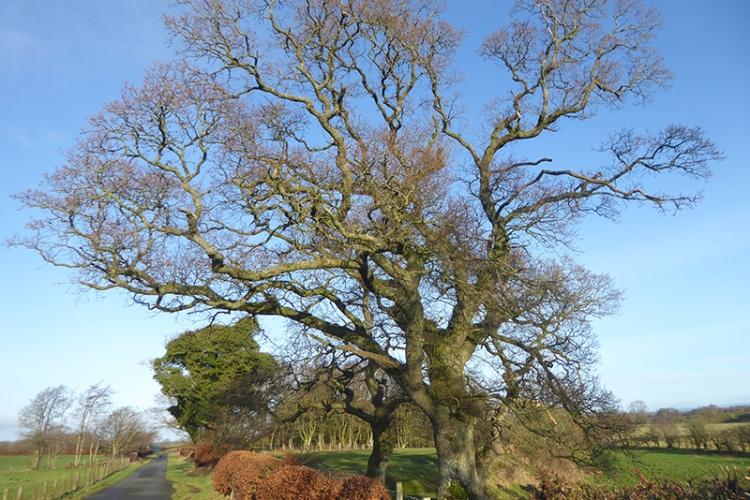 tree on springfield road