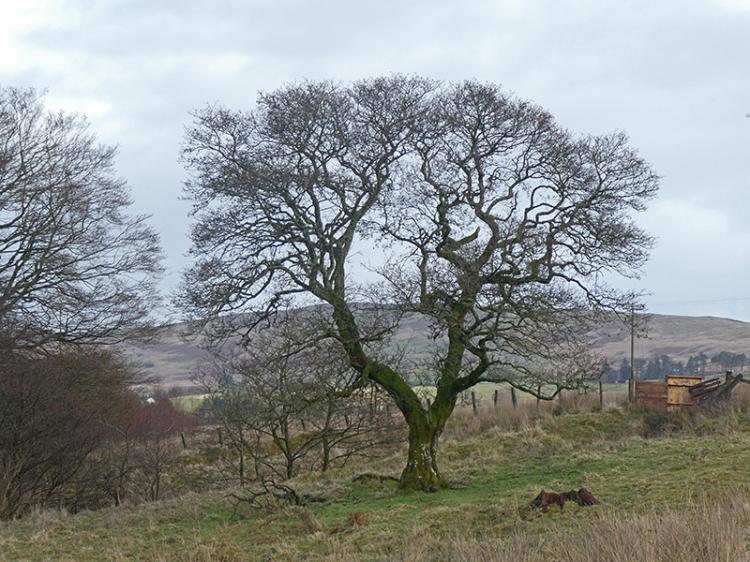 tree on warbla slope