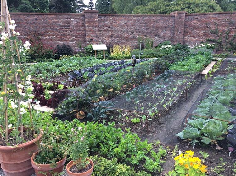 veg garden Lingholm