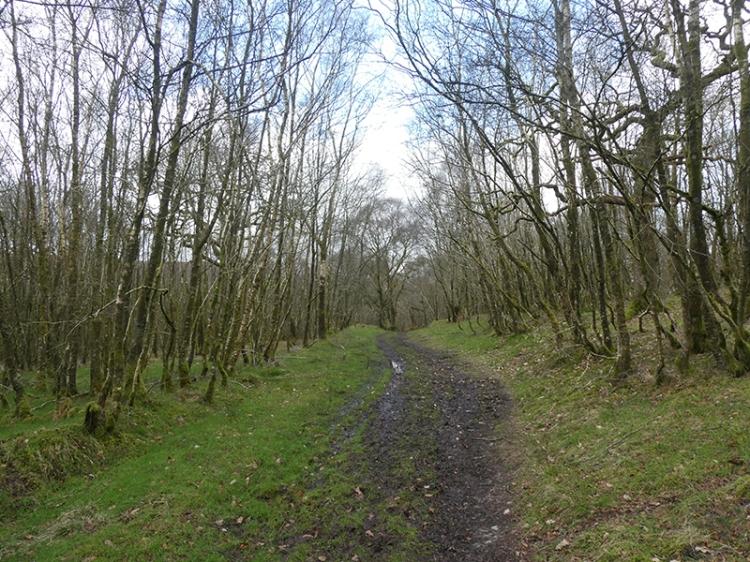 bierch wood walk
