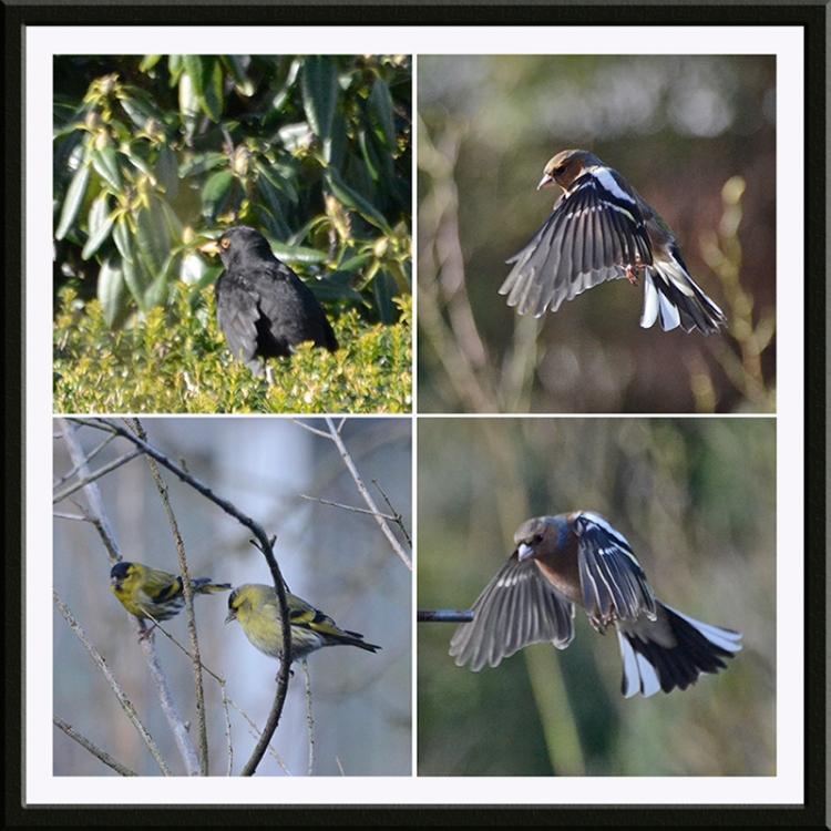 birds in sun