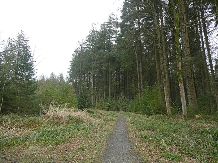 Byreburn Wood walk 1