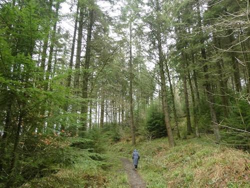 Byreburn Wood walk 2