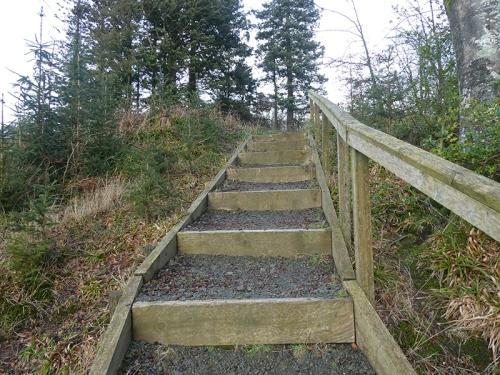 Byreburn Wood walk 3