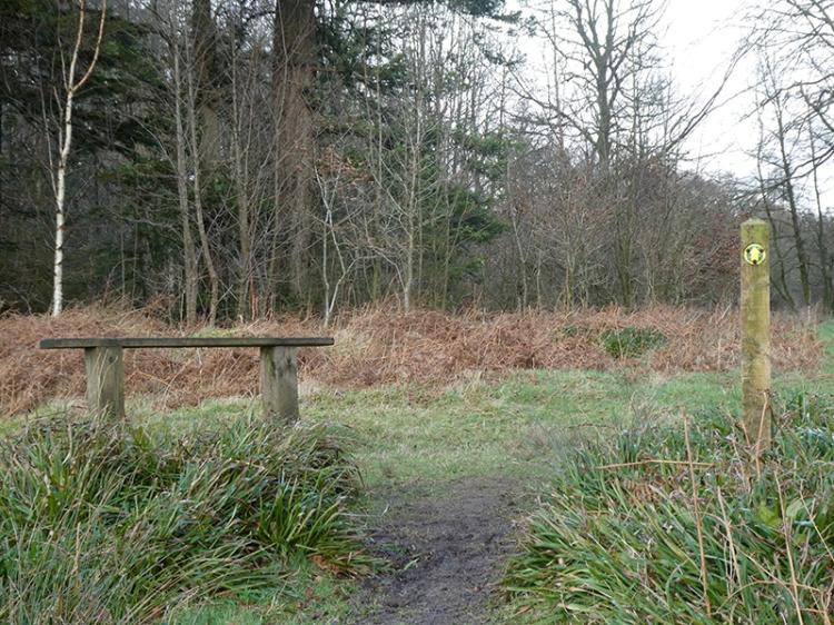 Byreburn Wood walk 4