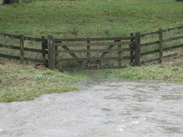 flood on Ewes Water