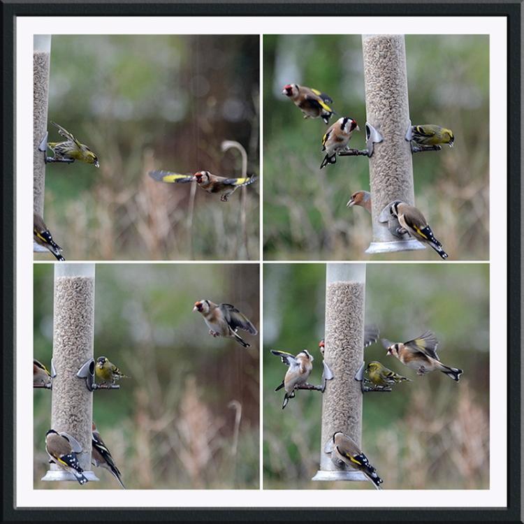 flying birds everywhere