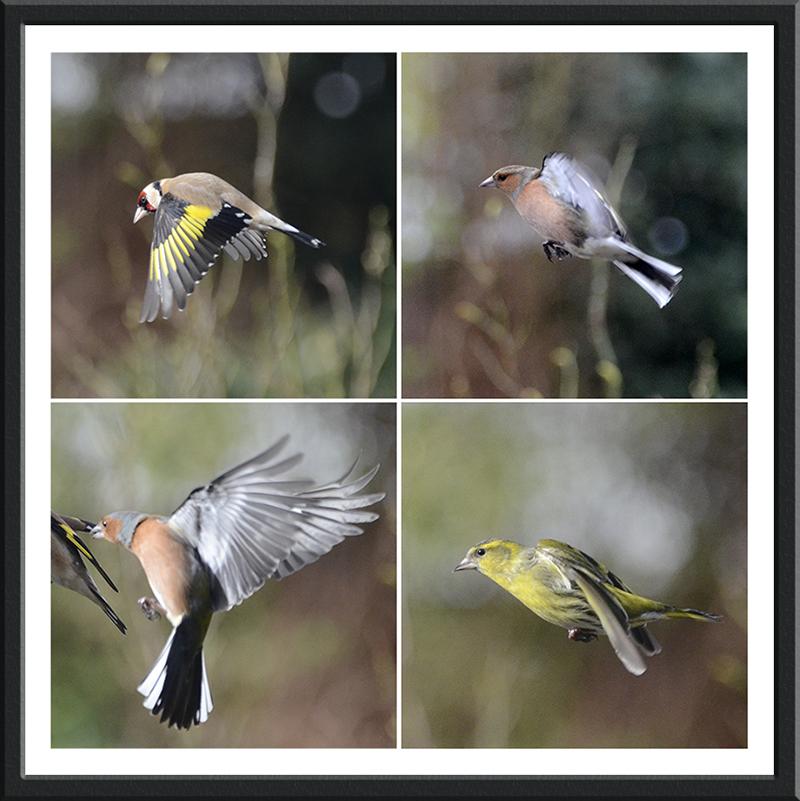 four flying birds