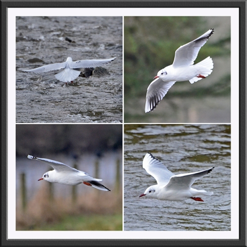 four flying gulls