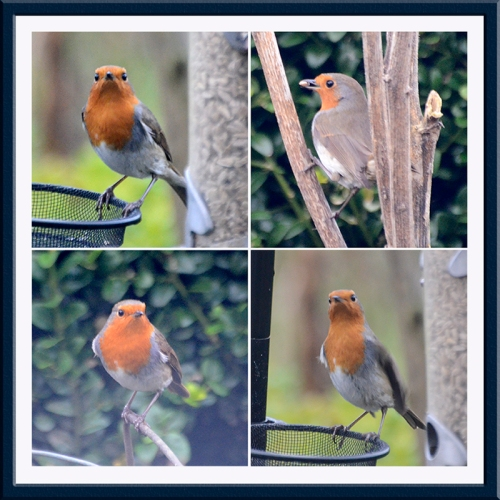 four robin panel