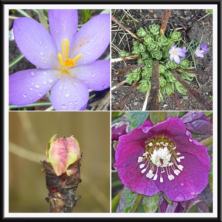 four spring shots