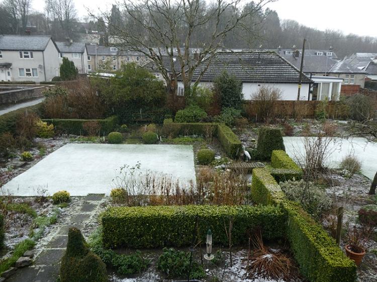 garden snowy morning