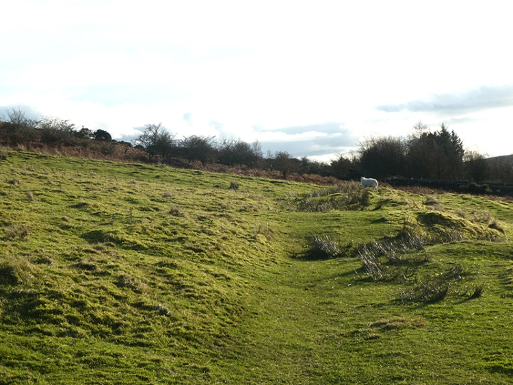 grass path on Whita