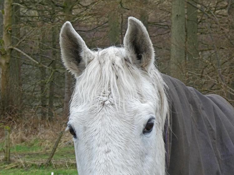 horse giving me the eye